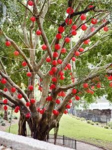 Lantern Tree - Toby Scott